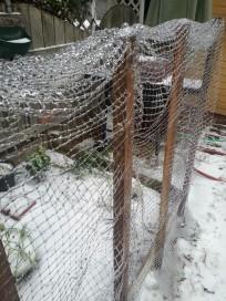 Iced fence